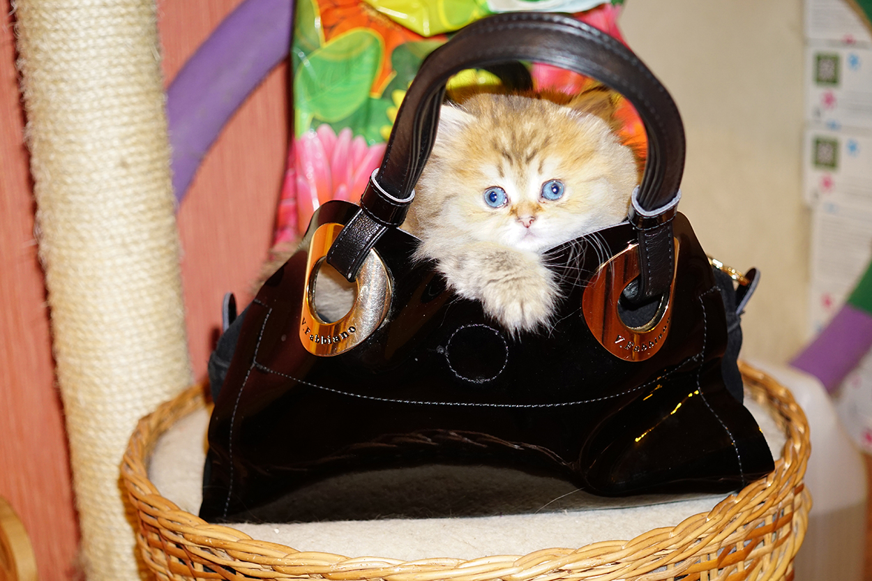 Обои Маленький, Кошка, стакан, желтоглазый, изнутри, пушистый, мордочка, ткань, плед, чёрный, котёнок, коричневый, малыш, черно-белый, котёнок. Кошки foto 12