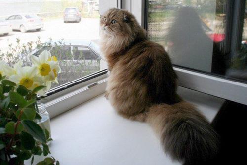 Картинки по запросу Кошки — как база генома пришельцев